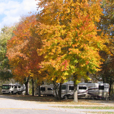 Beautiful Fall colored trees in a campground in Townsend