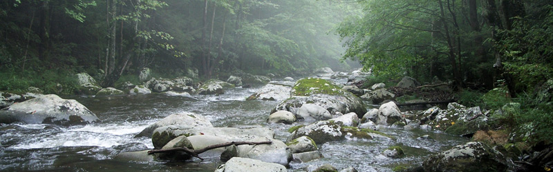 A beautiful trout stream in the Great Smoky Mountians
