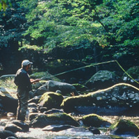 Man fly fishing in Little River
