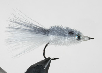 Shad with a Marabou Tail
