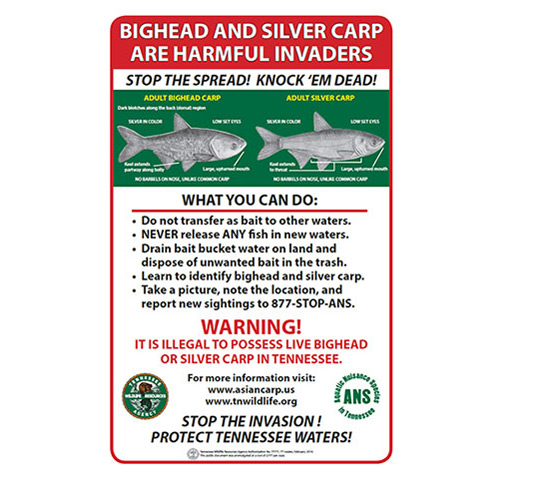 Tennessee Wildlife Resources Agency Poster concerning Bighead and Silver Carp.