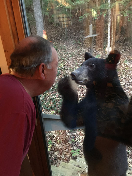 A bear looking inside at Byron at the back door.